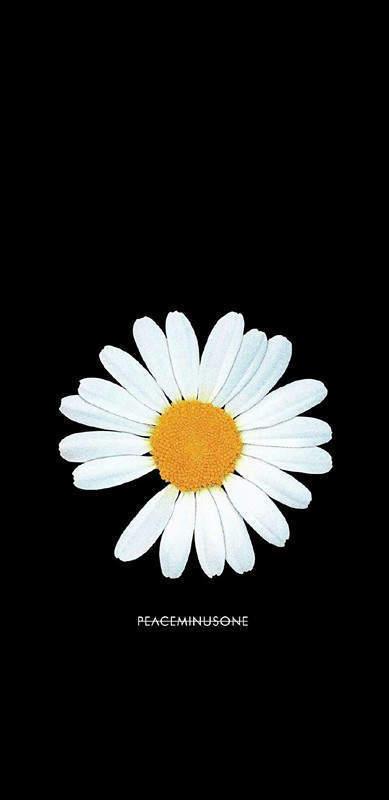 权志龙雏菊壁纸图片