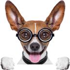 攒钱犬软件