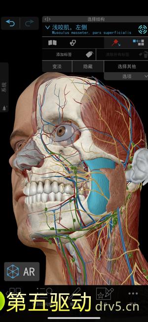 2021人体解剖学图谱图4