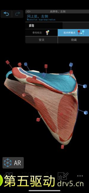 2021人体解剖学图谱图1