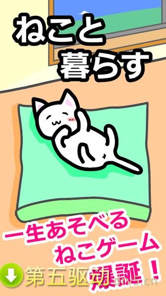 猫猫生活图3