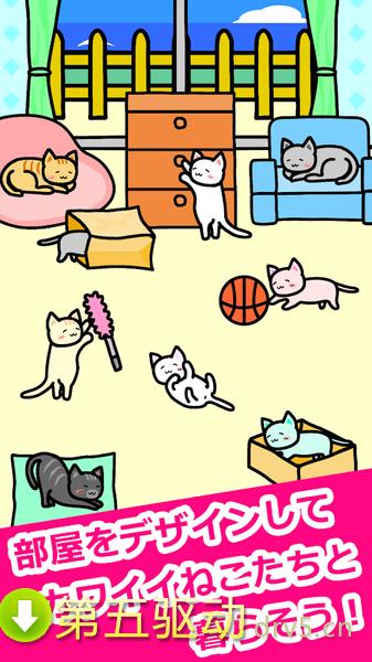 猫猫生活图1