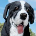 小狗农场模拟器
