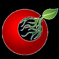 番茄接码平台